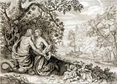 Gladiolus illyricus (II)